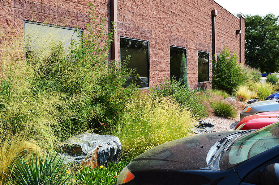 Arvada Xeriscape with Grasses & Shrubs